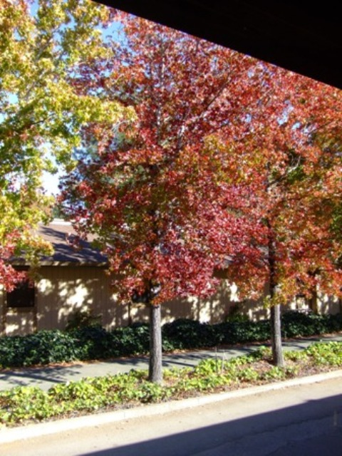 View of my Cotati office from the rear